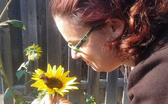 amandas-sunflower